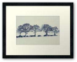 Day 210 - 5th February 2012 - Framed Print