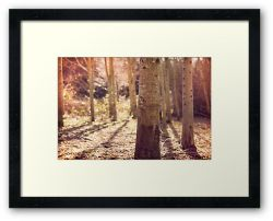 Day 230 - 25th February 2012 - Framed Print