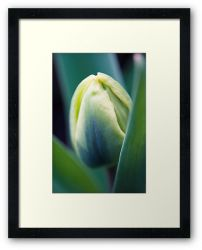 Day 252 - 18th March 2012 - Framed Print