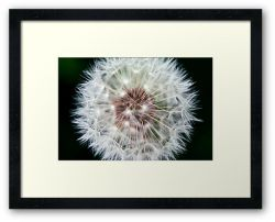 Day 301 - 6th May 2012 - Framed Print
