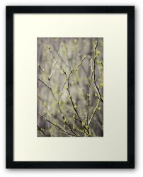 Day 302 - 7th May 2012 - Framed Print