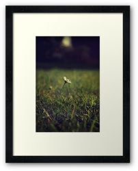 Day 9 - 19th July 2011 - Framed Print