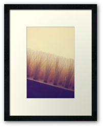 Day 48 - 27th August 2011 - Framed Print