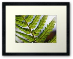 Day 67 - 15th September 2011 - Framed Print