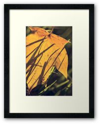 Day 80 - 28th September 2011 - Framed Print