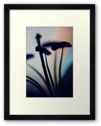 Day 82 - 30th September 2011 - Framed Print