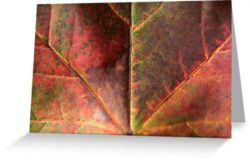 Day 84 - 2nd October 2011 - Greeting Card
