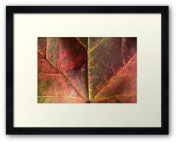 Day 84 - 2nd October 2011 - Framed Print