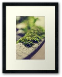 Day 90 - 8th October 2011 - Framed Print