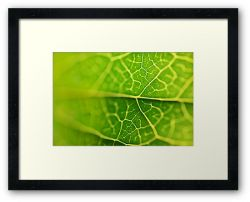 Day 98 - 16th October 2011 - Framed Print
