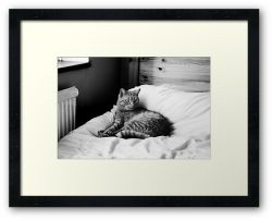 Day 105 - 23rd October 2011 - Framed Print