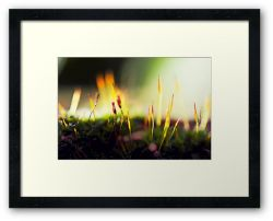 Day 140 - 27th November 2011 - Framed Print