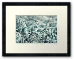 Day 188 - 14th January 2012 - Framed Print