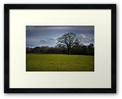 Day 193 - 19th January 2012 - Framed Print