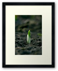 Day 201 - 27th January 2012 - Framed Print