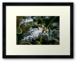 Day 205 - 31st January 2012 - Framed Print