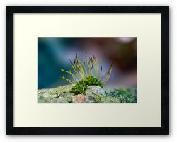 Day 207 - 2nd February 2012 - Framed Print