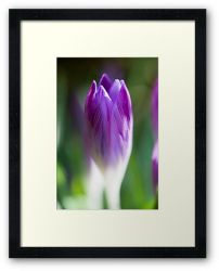 Day 224 - 19th February 2012 - Framed Print