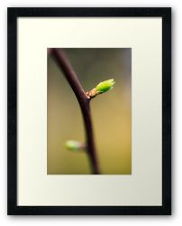 Day 237 - 3rd March 2012 - Framed Print