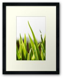 Day 245 - 11th March 2012 - Framed Print