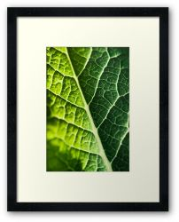 Day 246 - 12th March 2012 - Framed Print