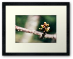 Day 248 - 14th March 2012 - Framed Print