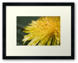 Day 258 - 24th March 2012 - Framed Print