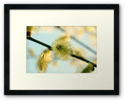 Day 260 - 26th March 2012 - Framed Print