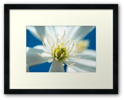 Day 261 - 27th March 2012 - Framed Print