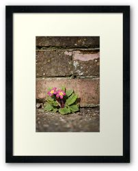 Day 264 - 30th March 2012 - Framed Print