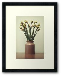 Day 276 - 11th April 2012 - Framed Print
