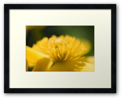 Day 286 - 21st April 2012 - Framed Print