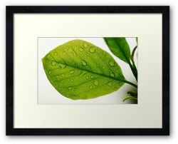 Day 288 - 23rd April 2012 - Framed Print