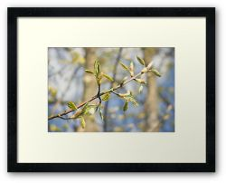 Day 291 - 26th April 2012 - Framed Print
