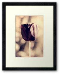 Day 295 - 30th April 2012 - Framed Print
