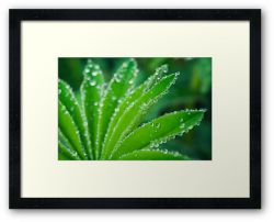 Day 298 - 3rd May 2012 - Framed Print