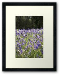 Day 307 - 12th May 2012 - Framed Print