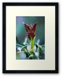 Day 314 - 19th May 2012 - Framed Print