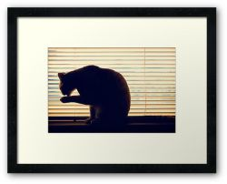 Day 321 - 26th May 2012 - Framed Print