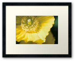 Day 322 - 27th May 2012 - Framed Print