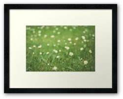 Day 324 - 29th May 2012 - Framed Print