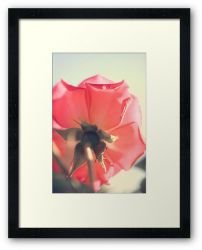 Day 333 - 7th June 2012 - Framed Print