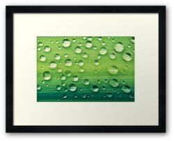 Day 338 - 12th June 2012 - Framed Print