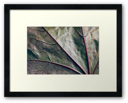 Day 339 - 13th June 2012 - Framed Print