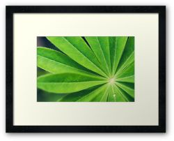 Day 341 - 15th June 2012 - Framed Print