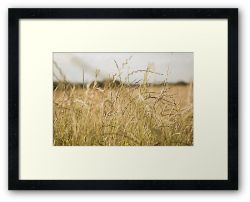 Day 344 - 18th June 2012 - Framed Print