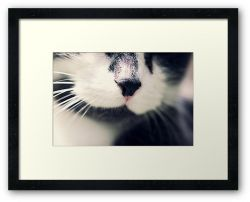 Day 345 - 19th June 2012 - Framed Print