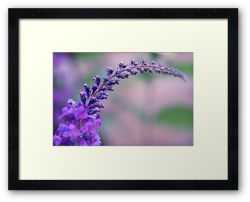 Day 351 - 25th June 2012 - Framed Print
