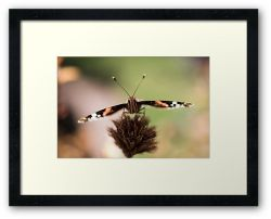 Day 356 - 30th June 2012 - Framed Print