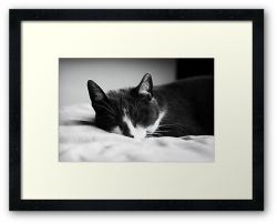Day 364 - 8th July 2012 - Framed Print